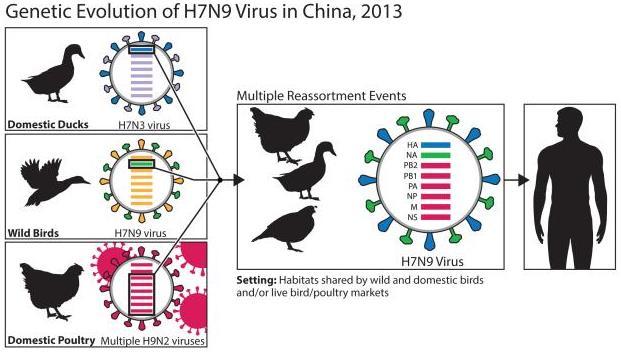 H7N9 15798_crop