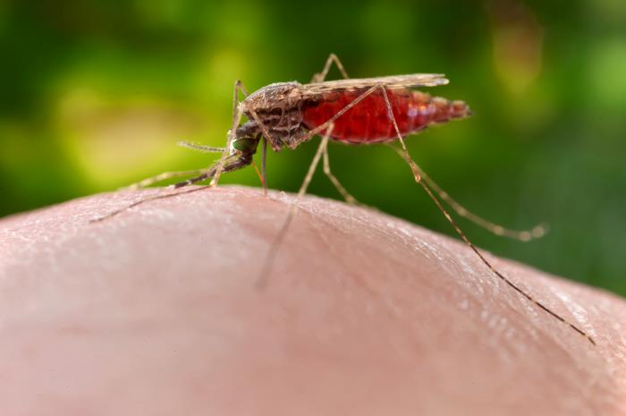 mosquito 18762_lores